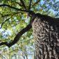 Symbolbild Baumschutzsatzung