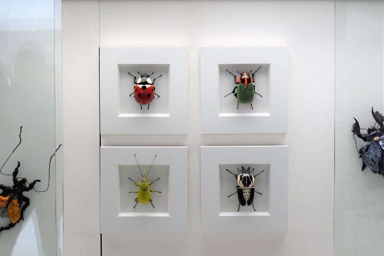 Käfer von Ross de Wayne Campbell