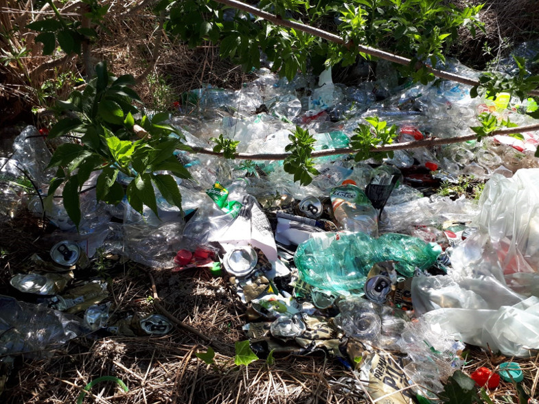 Pfandflaschen in der Natur entsorgt.